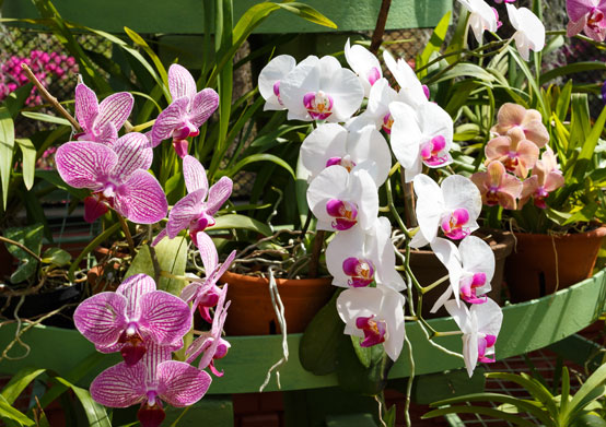 Orchid World in Christ Church, Barbados